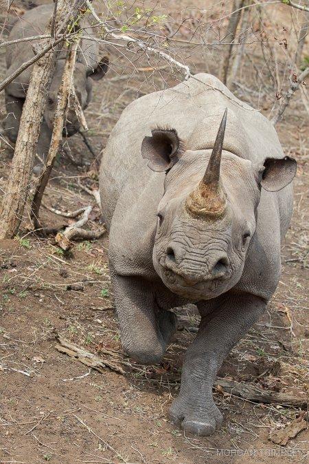 A Magical Safari In Malawi S Majete Africa Geographic