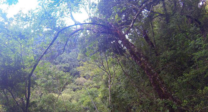 canopy tour drakensberg