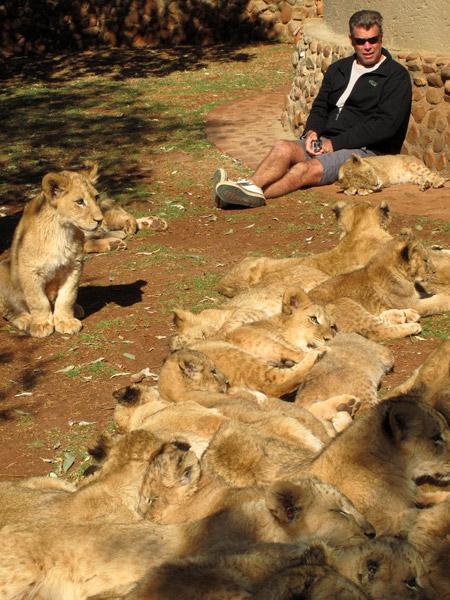 cub petting