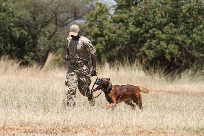 Canines take command of Akagera National park - Africa ...