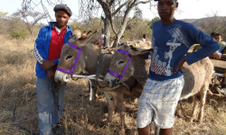 donkey owners