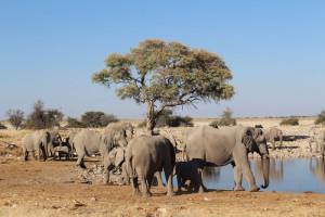elephants namibia