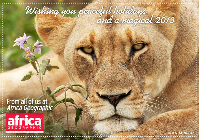 Seasons greetings africa geographic christmas in africa lion m4hsunfo