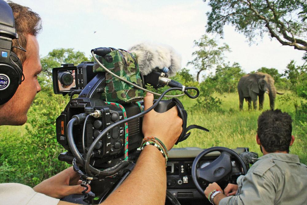 filming-elephants-janine