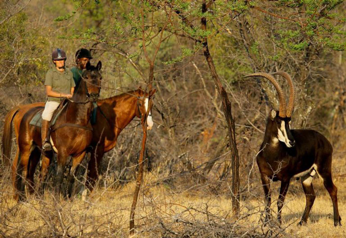 game census safari on horseback