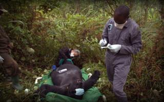 gorilla-doctors1
