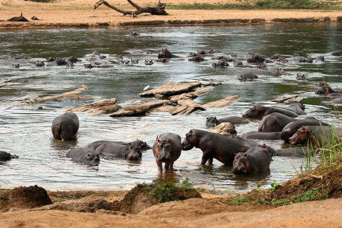 garamba national park Garamba national park in the democratic republic of the congo sits at the centre of a zone of human conflict that spans decades | editors desk.