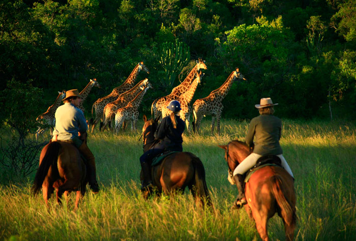 What is a game census safari all about? - Africa Geographic