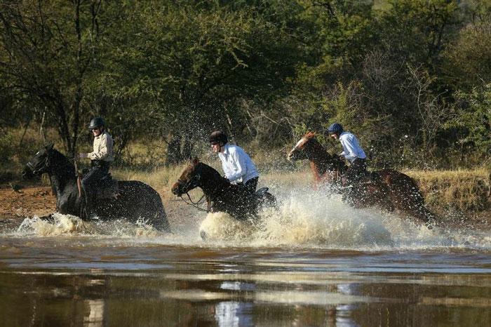 horses safari