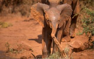 madikwe baby elephant