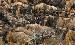 masai-mara-photo-safari-with-albie-venter