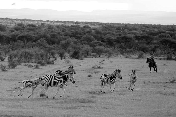 safari on horseback