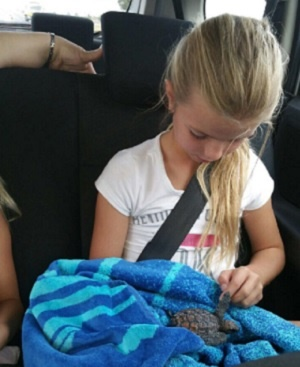 saving baby turtle
