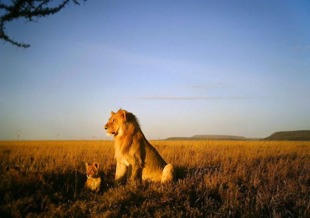 The Serengeti Needs You Africa Geographic