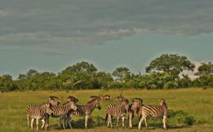 zebra waterbuck landscape