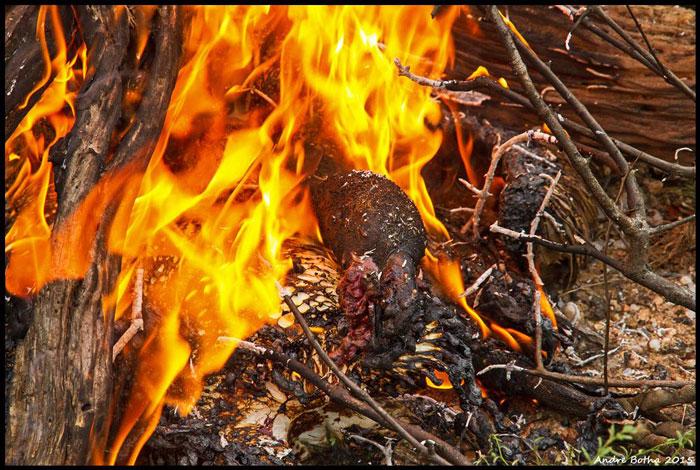 burning vultures