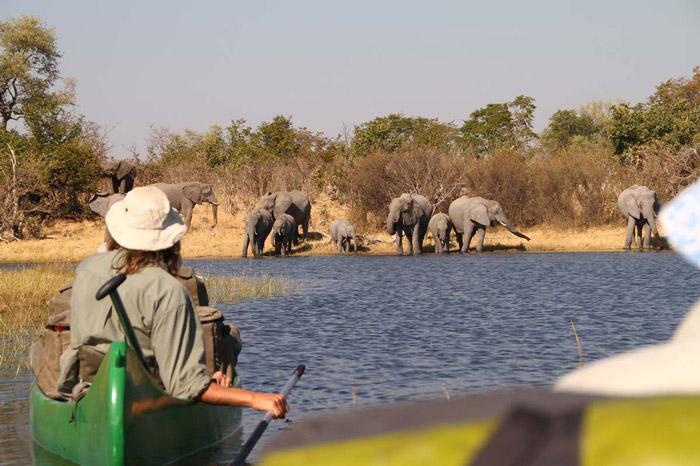 spotting elephants