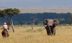 horse-safari-elephant