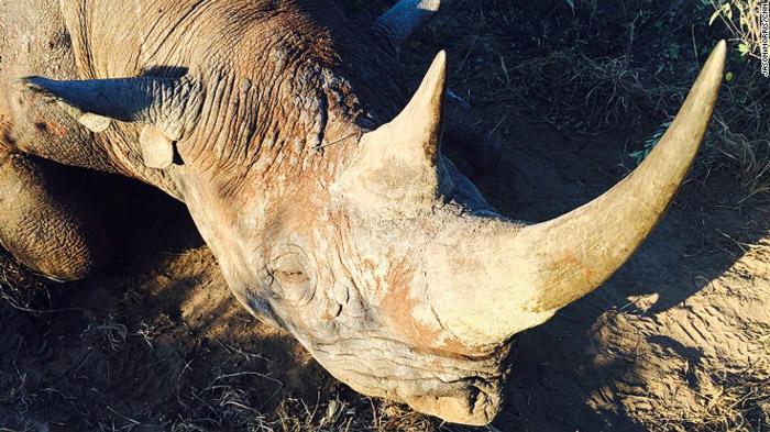black rhino hunt