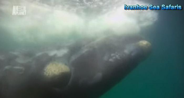 screenshot from video link