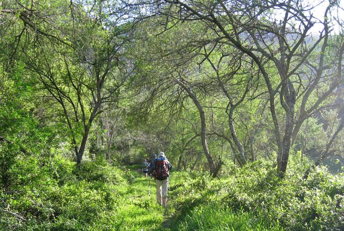 knysna forest hike