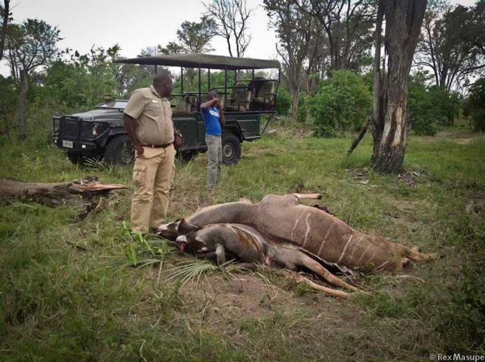 kudu dead