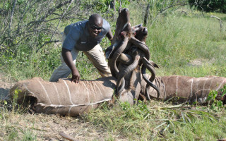 kudu fight