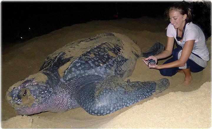 leatherback-family
