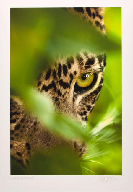 Leopard by Joubert