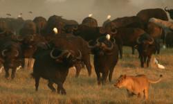 relentless enemies in Botswana