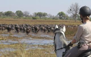 okavango-delta-horse-safari-2