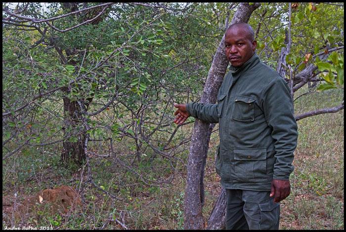 poaching snares