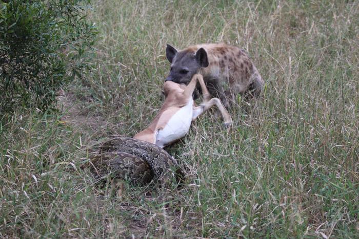 Deer Vs Dog And Cat