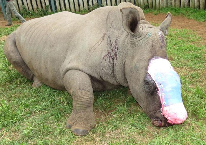 rhino poaching eastern cape