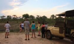 safari sunset stop