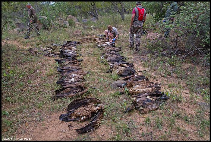 vulture poisoning