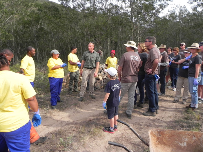 Clearing black wattle