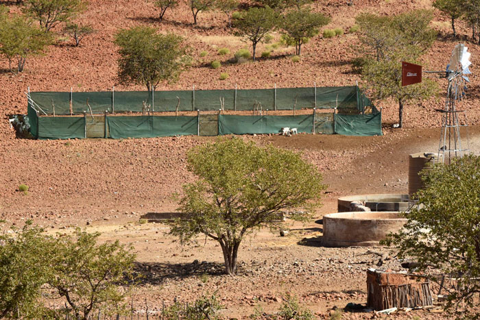 Lion conservancies namibia
