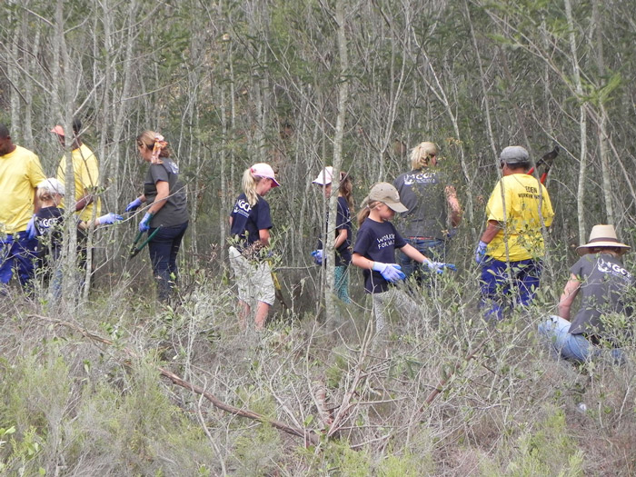 Communities help cut down the black wattle