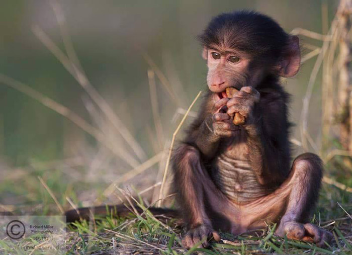 South african baby animals - photo#25