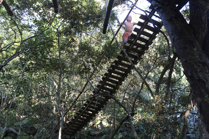 treehouse bridge