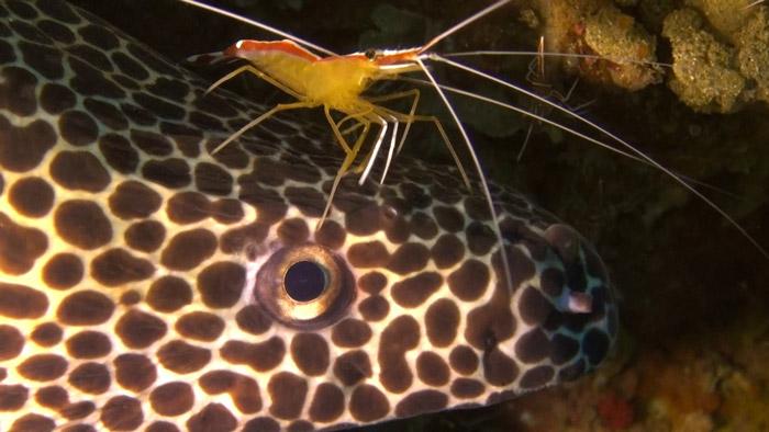 shrimp on eel