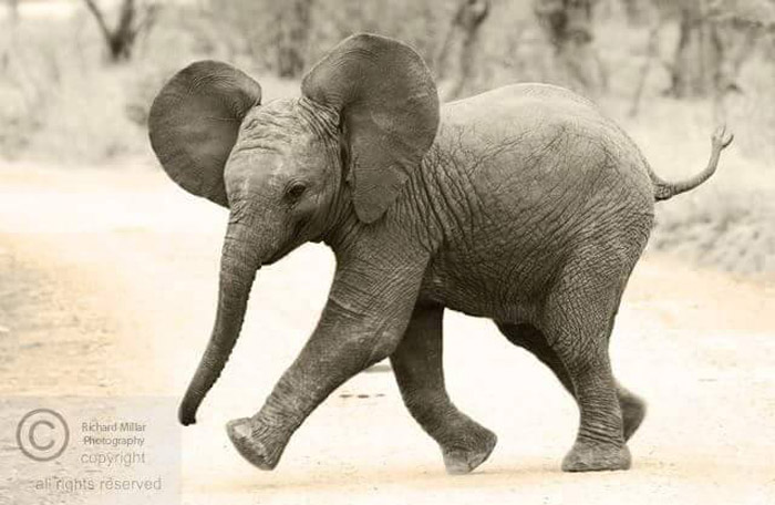 South african baby animals - photo#6