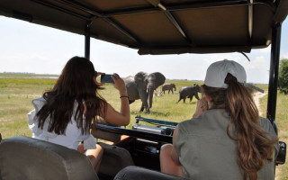 Sighting elephants in Chobe