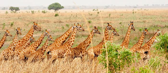 © Nuria Ortega/ African Parks
