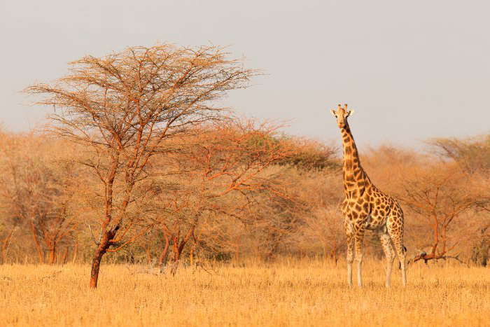 © African Parks
