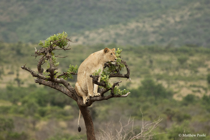 © Matthew Poole/ African Parks