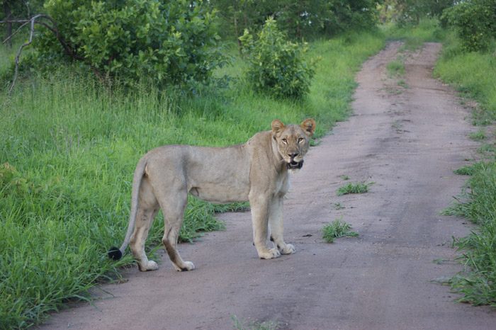 Shire - Queen of Majete © African Parks