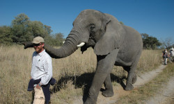 Elephant guide in the Okavango