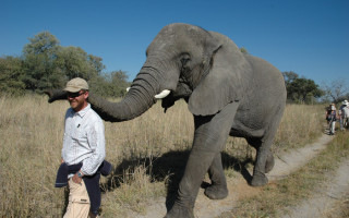 Elephant guide in the Okavango
